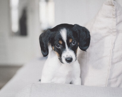 Portrait of dog sitting on white sofa at home - FSIF01059