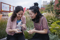 Happy female friends using smart phones while sitting on patio - FSIF01179