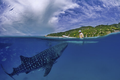 Whale shark swimming in sea below a man kayaking - FSIF01288