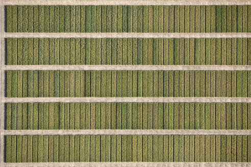 Full frame shot of agricultural field, Hohenheim, Stuttgart, Baden-Wuerttemberg, Germany - FSIF01312