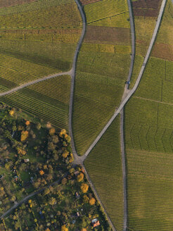 Aerial view of crops in agricultural field during autumn, Stuttgart, Baden-Wuerttemberg, Germany - FSIF01315
