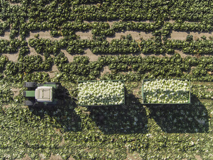 Directly above view of tractor and trailers of cabbage in field, St. Poelten, Austria - FSIF01324