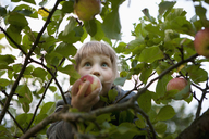 Low angle view of girl holding apple on tree - FSIF01477