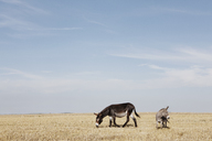 Donkeys grazing on field against sky - FSIF01480