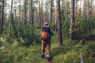 Rear view of hiker walking in forest - FSIF01504