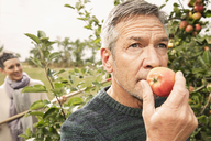 Man smelling fresh apple in orchard - FSIF02197