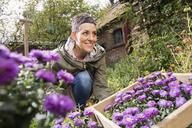 Happy woman planting purple flowers in back yard - FSIF02200