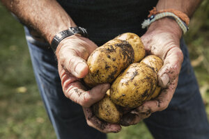 Midsection of man holding dirty potatoes in garden - FSIF02209