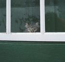Tabby cat looking through a window - FSIF02347