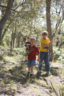 Three boys collecting wood in a forest - FSIF02452