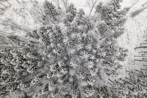 Germany, Bavaria, Conifers in winter from above - MAEF12534