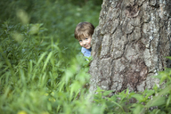 A young boy peeking from behind a tree trunk - FSIF02829