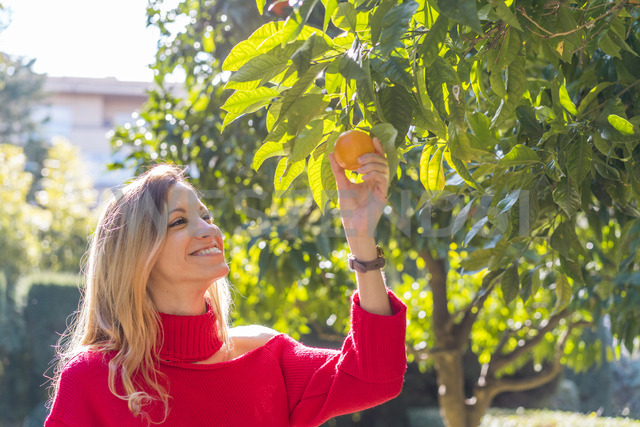 Smiling young woman picking mandarin from tree in a garden - AFVF00192