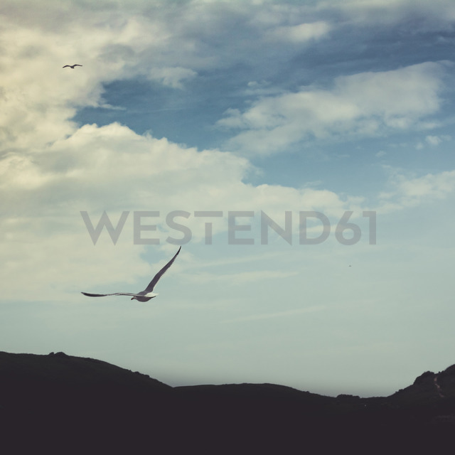 Flying seagull - DWIF00900