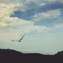 Flying seagull - DWIF00900