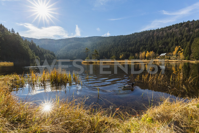 Germany, Bavaria, Lower Bavaria, Bavarian Forest, Kleiner Arbersee with floating islands - FOF09823