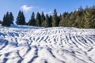 Germany, Bavaria, Upper Bavaria, Garmisch-Partenkirchen, Werdenfelser Land, hump-meadow in winter - STSF01472