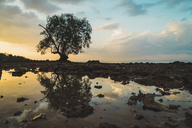 Thailand, Phi Phi Islands, Ko Phi Phi, lonely tree with reflection in the water at sunset - KKAF00902