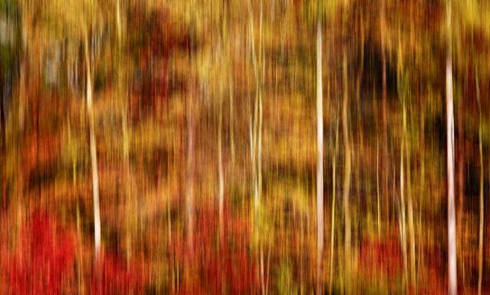 Blurred autumn forest - JTF00936