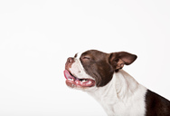 Close up of dog's panting face - CAIF01682