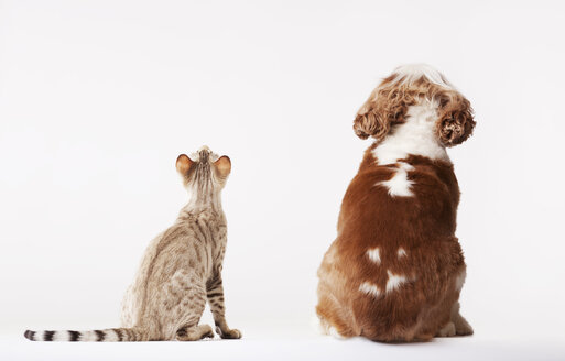 Dog and cat looking up together - CAIF01694