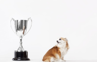 Dog looking at trophy - CAIF01697