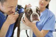 Veterinarians examining dog in vet's surgery - CAIF01724