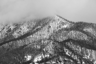 Trees growing on snowy mountainside - CAIF02109