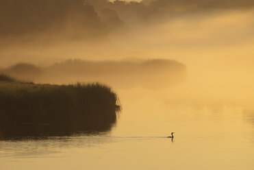 Silhouette of plants and bird in marsh - CAIF02127