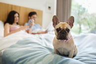 Dog sitting with couple in bed - CAIF02226