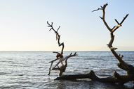 Young woman practicing yoga on a fallen tree in the sea - IGGF00443