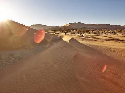 Africa, Namibia, Namib-Naukluft National Park, Namib desert, desert dunes and sunshine - CVF00206