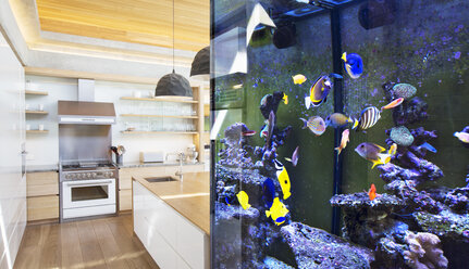 Tropical fish swimming in aquarium outside kitchen - HOXF00284