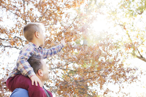 Father carrying son on shoulders reaching for autumn leaves - HOXF00557