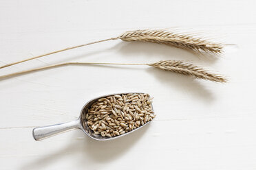 Two rye spikes and shovel of rye grains on light background - EVGF03289