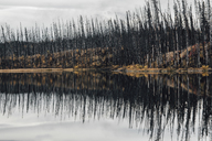 Canada, British Columbia, deadwood after forest fire - GUSF00369