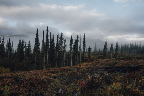 Canada, British Columbia, Kitimat-Stikine A, forest in autumn - GUSF00384
