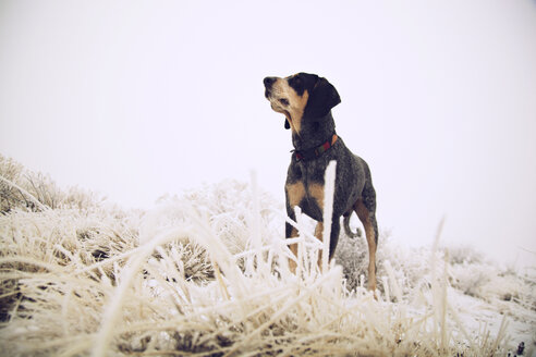 Black dog standing amidst frozen grass on field - CAVF00103