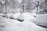 Snow covered cars and bare trees in city - CAVF00292