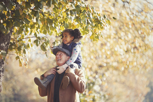 Grandfather carrying daughter on shoulders below trees in sunny autumn park - CAIF05433