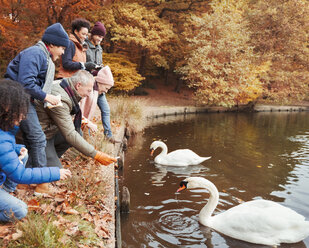 Multi-generation family feeding swans at pond in autumn park - CAIF05439