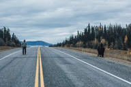 Canada, British Columbia, man walking on Alaska Highway with bison at the roadside - GUSF00495