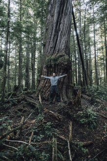 Canada, British Columbia, Vancouver Island, man on Cape Scott Trail at giant tree - GUSF00525