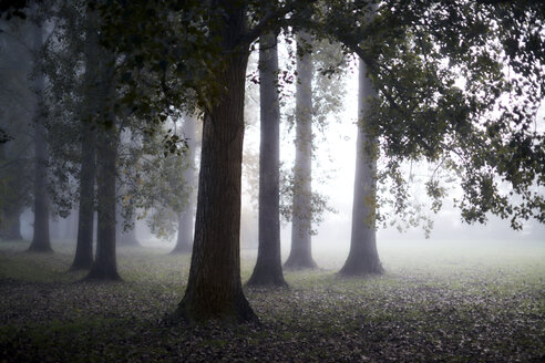 Ethereal fog behind tranquil autumn trees - CAIF06021