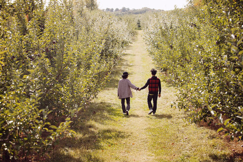 Couple with holding hands walking on orchard - CAVF01323