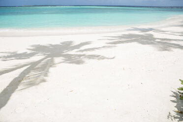 Dream beach with shadows of palms on the Maldives - ZEF15176