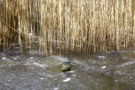 Germany, frozen lake, grasses and stone - JTF00945