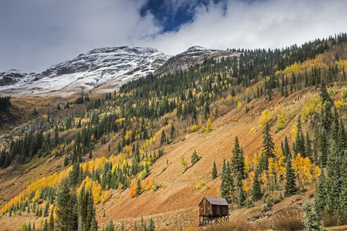 Autumn trees on remote hillside, Red Mountain Pass, Colorado United States - CAIF07587