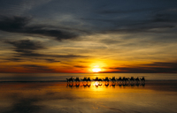 Silhouette of people riding camels at sunset, Broome, Australia - CAIF07611