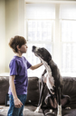 Boy playing with dog at home - CAVF02597